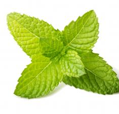 Mint Sprig - Drink Recipe Ingredient