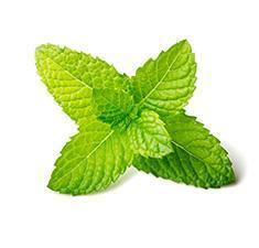 Fresh Mint Leaves - Drink Recipe Ingredient