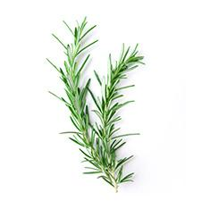 Rosemary Sprigs - Drink Recipe Ingredient
