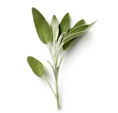 Sage Leaves - Drink Recipe Ingredient