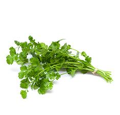 Sprig Cilantro - Drink Recipe Ingredient
